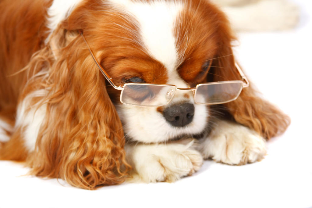 How Well Does Your Pet See?